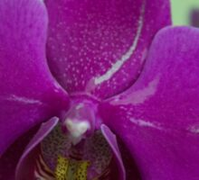 Orchid Macro Sticker