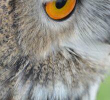 Eagle's Eye Sticker