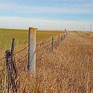 The Fence Row by Mary Carol Story