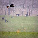 Before the Storm the Turkey Vulture and the Cattle by TrendleEllwood