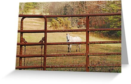 Don't Fence Me In by Mary Carol Story