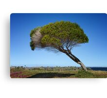 Coastal Tree Canvas Print