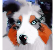 Collie Puppy Dog Photographic Print