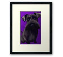 Schnauzer Puppy Framed Print