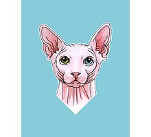 Sphynx cat portrait Photographic Print