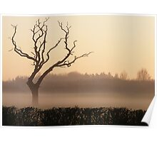 Lone Tree at Sunset in the Mist Poster