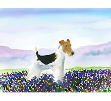 Wire Fox Terrier'Spring Flowers' Photographic Print