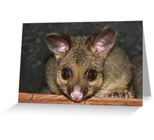 Cute Australian Possum with big eyes Greeting Card