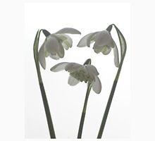 Galanthus nivalis flore pleno Unisex T-Shirt