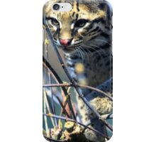 Curious baby ocelot iPhone Case/Skin