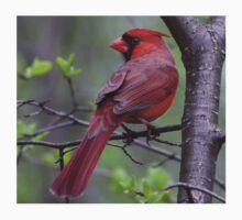 Northern Cardinal  Kids Tee
