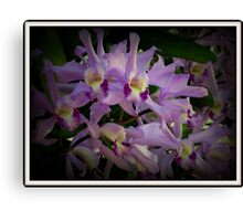 Lilac Asian Orchid Canvas Print