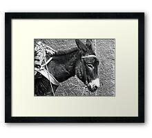 Donkey in Marrakesh Framed Print