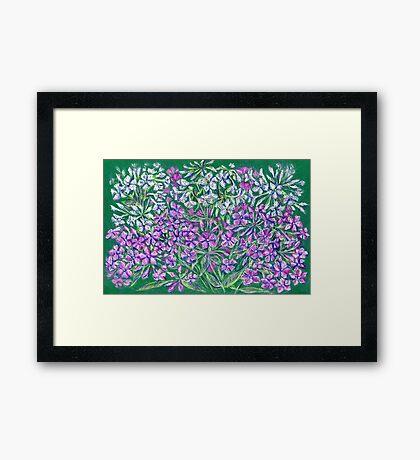 Pink phloxes flowers Framed Print