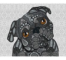 Cute black Pug Photographic Print