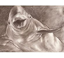 Happy Beluga Photographic Print