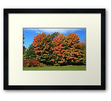 Tress  in Fall colours.  Framed Print