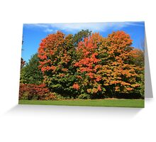 Tress  in Fall colours.  Greeting Card