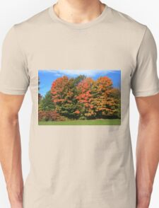 Tress  in Fall colours.  T-Shirt