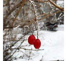 Frozen berries Photographic Print