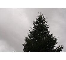 Fir tree winter Photographic Print