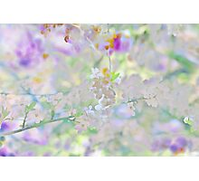 Abstract Cherry Blossoms Photographic Print