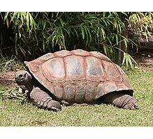 Tortoise 1 Photographic Print