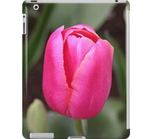 Single pink tulip bloom iPad Case/Skin