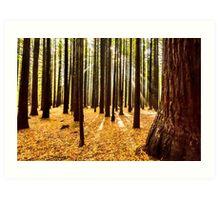 Beams & Trees Art Print