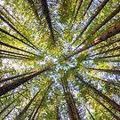 Redwood Heaven by SeeOneSoul