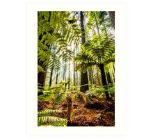 Whakarewarewa Forest Art Print