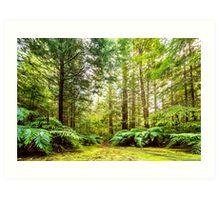 Green Wonderland of Whakarewarewa Forest Art Print