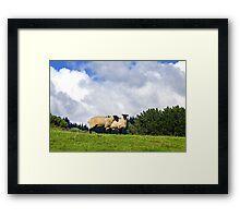 Shy Sheep Framed Print