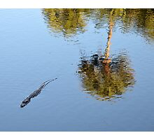 Alligator Swimming in a Pond Photographic Print