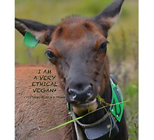 I am A Ethical Vegan actually all Elk are Photographic Print