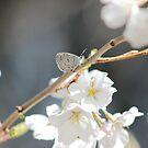 Spring Azure by elasita