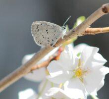 Spring Azure Sticker