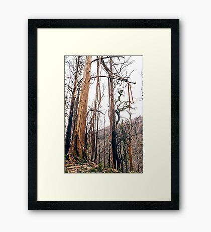 Trees After Bushfire Framed Print