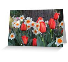 Tulips! Greeting Card