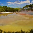 Champagne Pool by Barbara  Brown