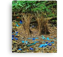 Bowerbird's Bower Canvas Print