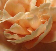 Peach Carnation Sticker