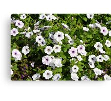 White spring flowers in the park. Canvas Print