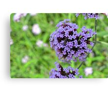 Macro on purple spring flowers. Canvas Print
