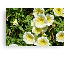 Yellow light flowers in the park. Canvas Print