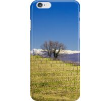 Vineyard in early spring iPhone Case/Skin