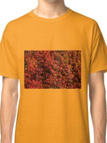 American Sweet Gum Foliage Classic T-Shirt