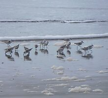 Shorebirds in San Francisco by Ms. Muse