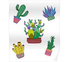 Cactus folie Poster