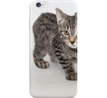 Gray Striped Cat on White Background iPhone Case/Skin